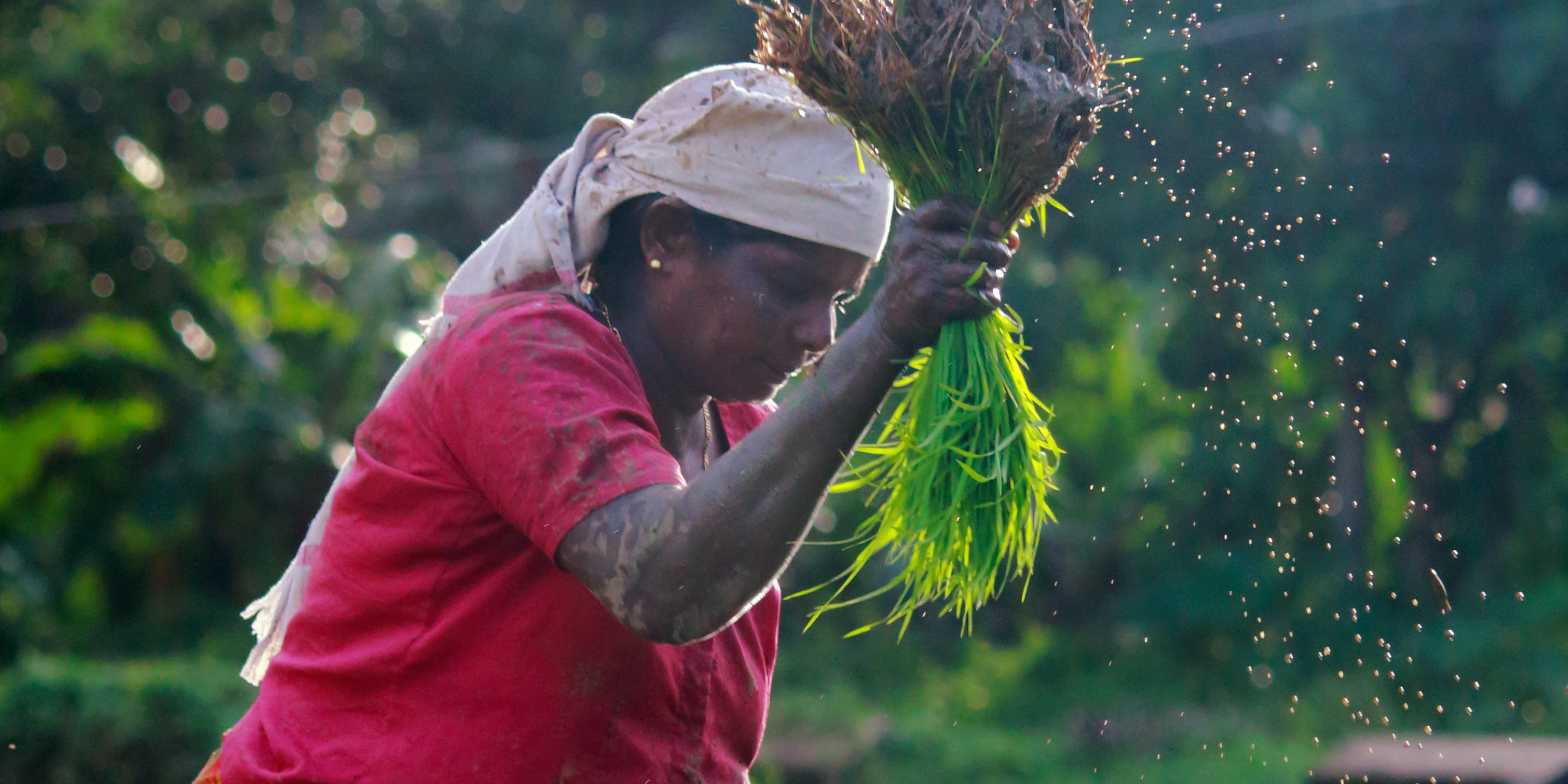 Read more about the article The Link Between Economics, Climate Change, and Gender